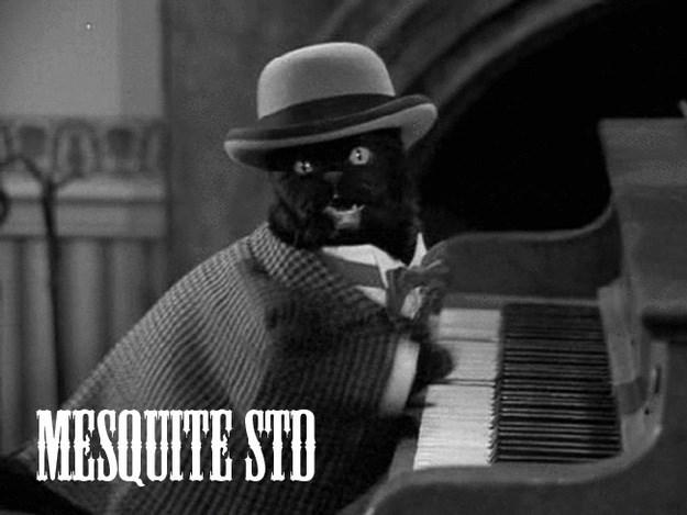 Jazz pianist - RO MESQUITE STD