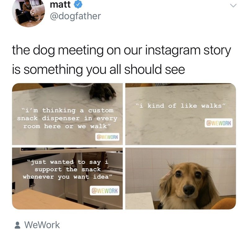 """Canidae - matt @dogfather the dog meeting on our instagram story is something you all should see i kind of like walks"""" i'm thinking a custom snack dispenser in every @WEWORK room here or we walk"""" @WEWORK just wanted to say i support the snack whenever you want idea"""" @WEWORK WeWork"""