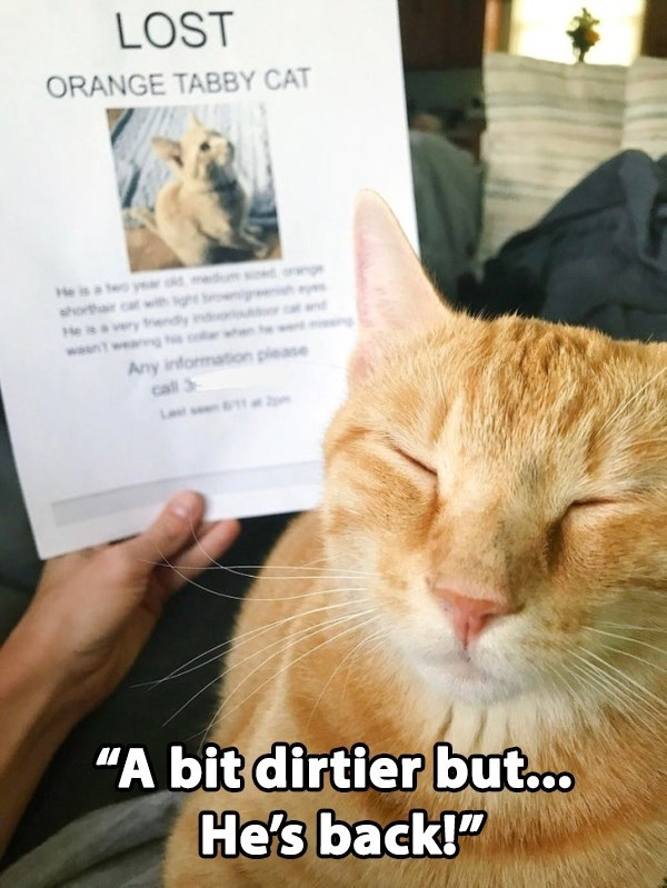 """Cat - LOST ORANGE TABBY CAT He is year ge shorth very frendly He wasn ag Any information please call 3 L """"A bit dirtier but... He's back!"""""""