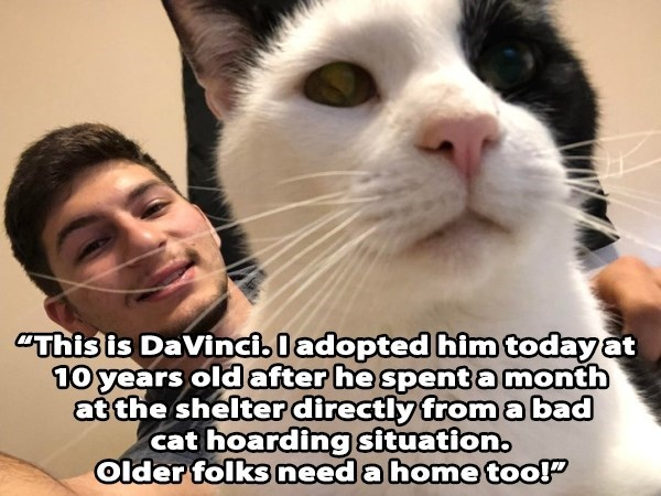 Cat - This is Davinciladopted him today at 10 years old after he spent amonth at the shelter directly from a bad hoarding situation. Older folks need a home tooP