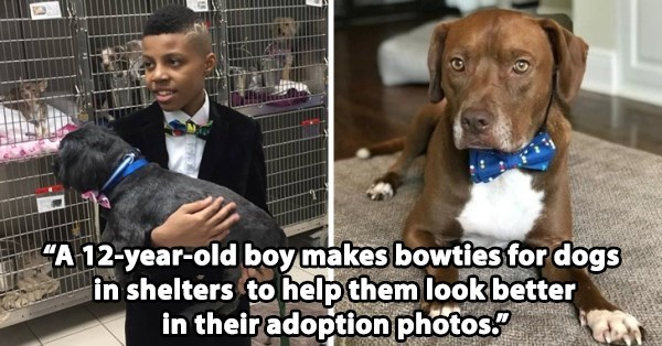 """Dog breed - """"A 12-year-oldboy makes bowties for dogs in shelters to help them look better in their adoption photos?"""