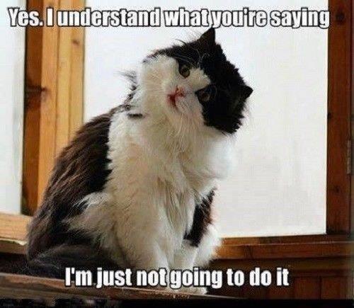 cat memes - 9375554304