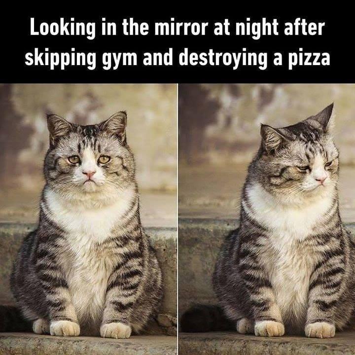 cat memes - 9375573248