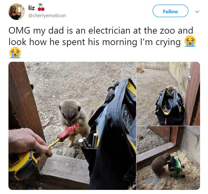 animal tweets - 9375627520