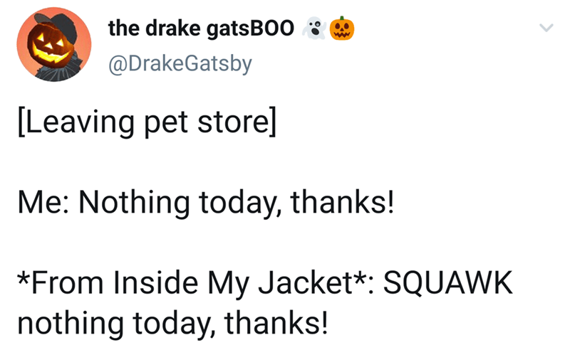 Text - the drake gats BO0 @DrakeGatsby [Leaving pet store] Me: Nothing today, thanks! *From Inside My Jacket*: SQUAWK nothing today, thanks!