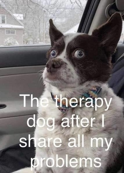 Dog - The therapy dog after share all my problems