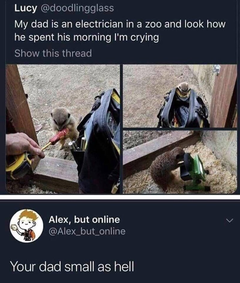 Adaptation - Lucy @doodlingglass My dad is an electrician in a zoo and look how he spent his morning I'm crying Show this thread Alex, but online @Alex_but_online Your dad small as hell