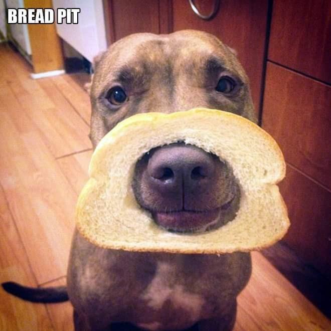 Dog - BREAD PIT