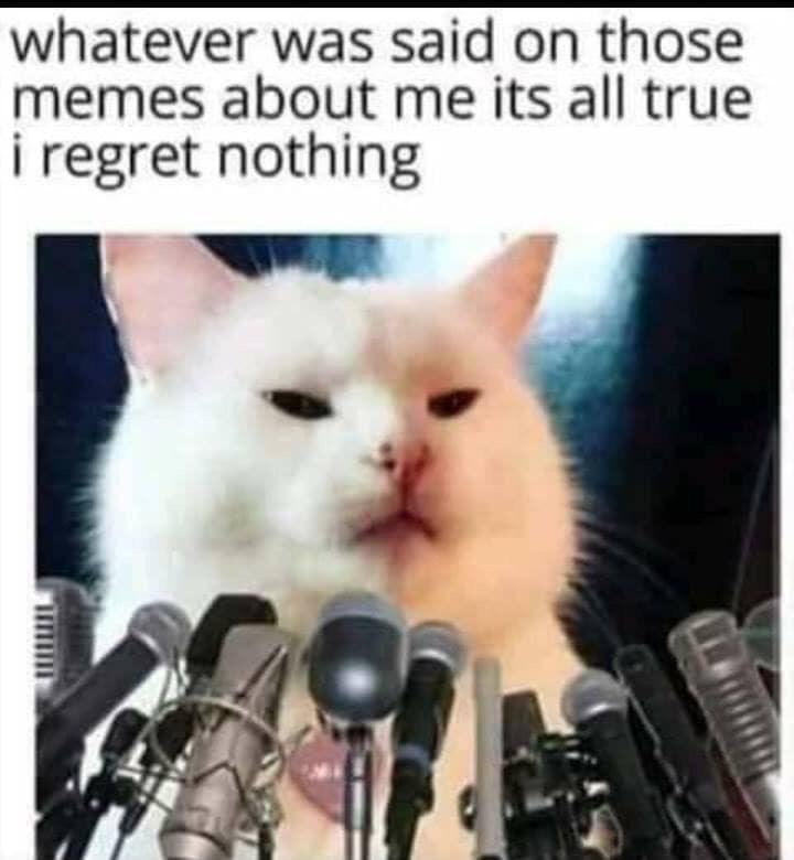 Cat - whatever was said on those memes about me its all true i regret nothing