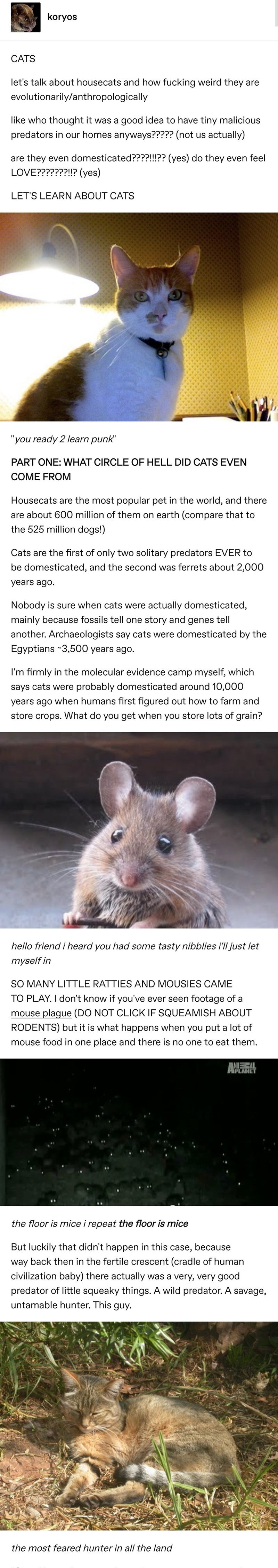 """Mouse - koryos CATS let's talk about housecats and how fucking weird they are evolutionarily/anthropologically like who thought it was a good idea to have tiny malicious predators in our homes anyways????? (not us actually) are they even domesticated????!?? (yes) do they even feel LOVE???????!!? (yes) LET'S LEARN ABOUT CATS """"you ready 2 learn punk"""" PART ONE: WHAT CIRCLE OF HELL DID CATS EVEN COME FROM Housecats are the most popular pet in the world, and there are about 600 million of them on ear"""