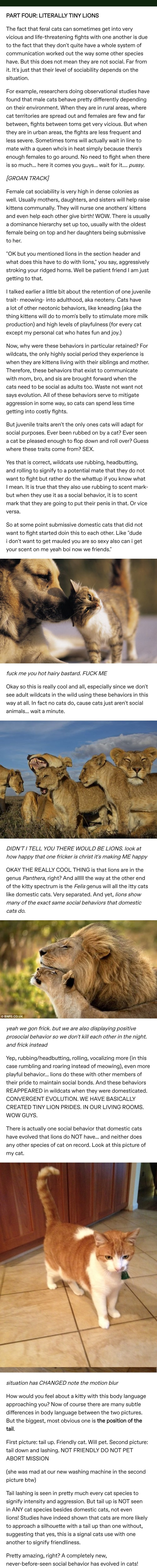 cats are tiny lions