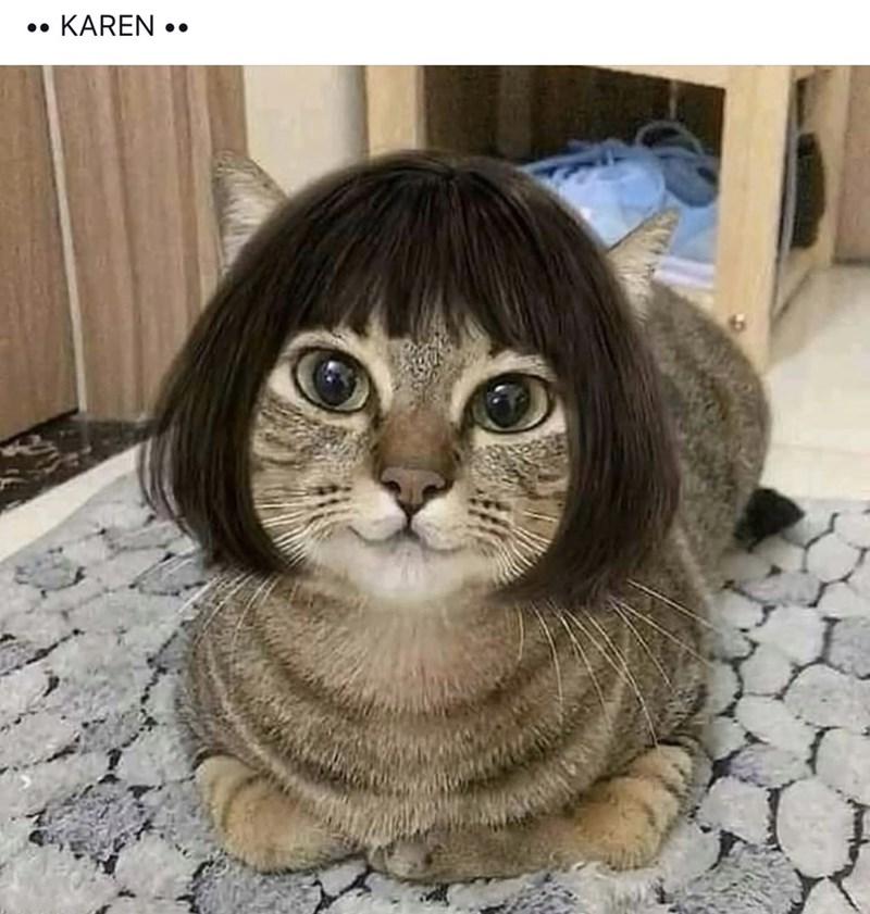 Cat - KAREN.