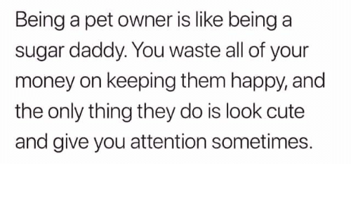 Text - Being a pet owner is like being a sugar daddy. You waste all of your money on keeping them happy, and the only thing they do is look cute and give you attention sometimes.