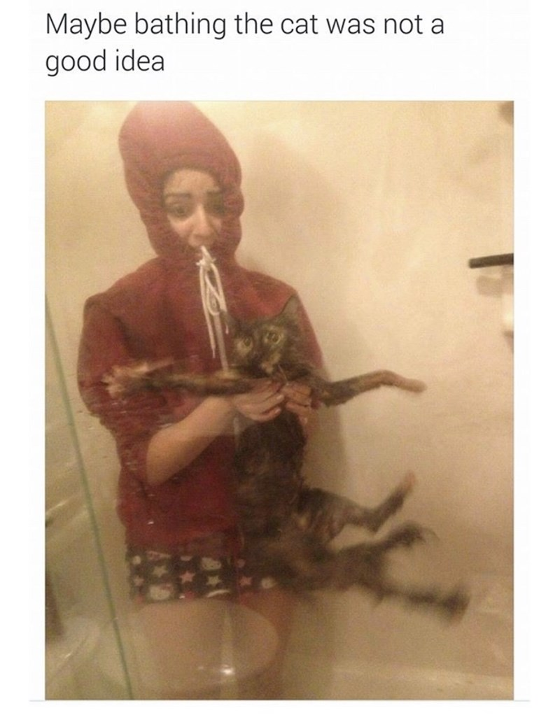 Text - Maybe bathing the cat was not a good idea