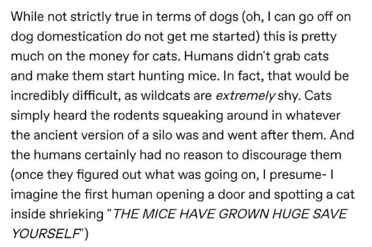 Text - While not strictly true in terms of dogs (oh, I can go off on dog domestication do not get me started) this is pretty much on the money for cats. Humans didn't grab cats and make them start hunting mice. In fact, that would be incredibly difficult, as wildcats are extremely shy. Cats simply heard the rodents squeaking around in whatever the ancient version of a silo was and went after them. And the humans certainly had no reason to discourage them (once they figured out what was going on,