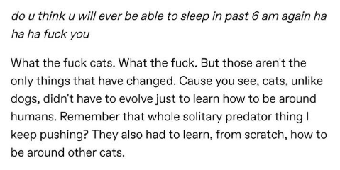Text - do u think u will ever be able to sleep in past 6 am again ha ha ha fuck you What the fuck cats. What the fuck. But those aren't the only things that have changed. Cause you see, cats, unlike dogs, didn't have to evolve just to learn how to be around humans. Remember that whole solitary predator thing keep pushing? They also had to learn, from scratch, how to be around other cats.