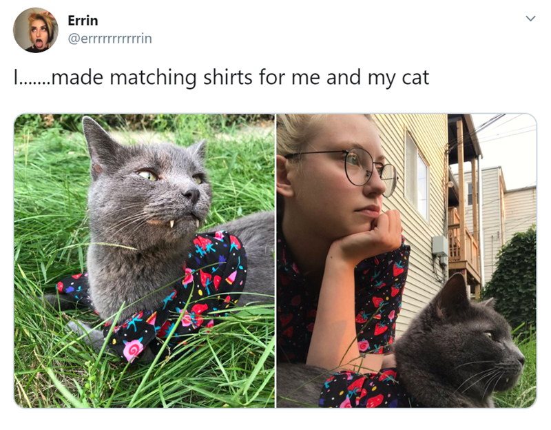 wholesome animal tweets