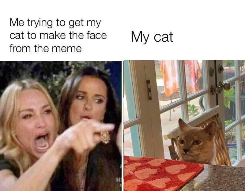 Facial expression - Me trying to get my cat to make the face My cat from the meme