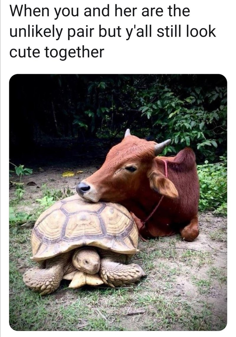 Vertebrate - When you and her are the unlikely pair but y'all still look cute together
