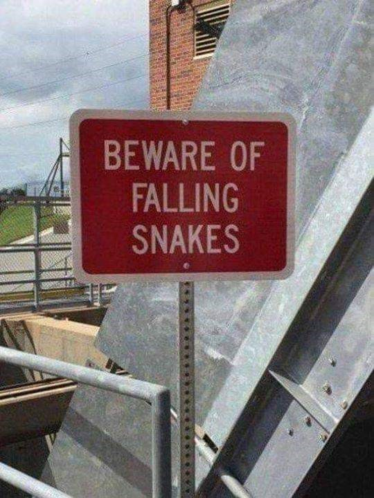 Signage - BEWARE OF FALLING SNAKES