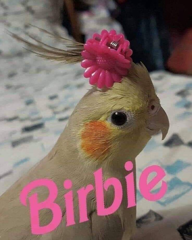 Bird - Birbie
