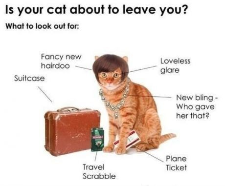 Text - Is your cat about to leave you? What to look out for: Fancy new hairdoo Loveless glare Suitcase New bling- Who gave her that? Plane Ticket Travel Scrabble