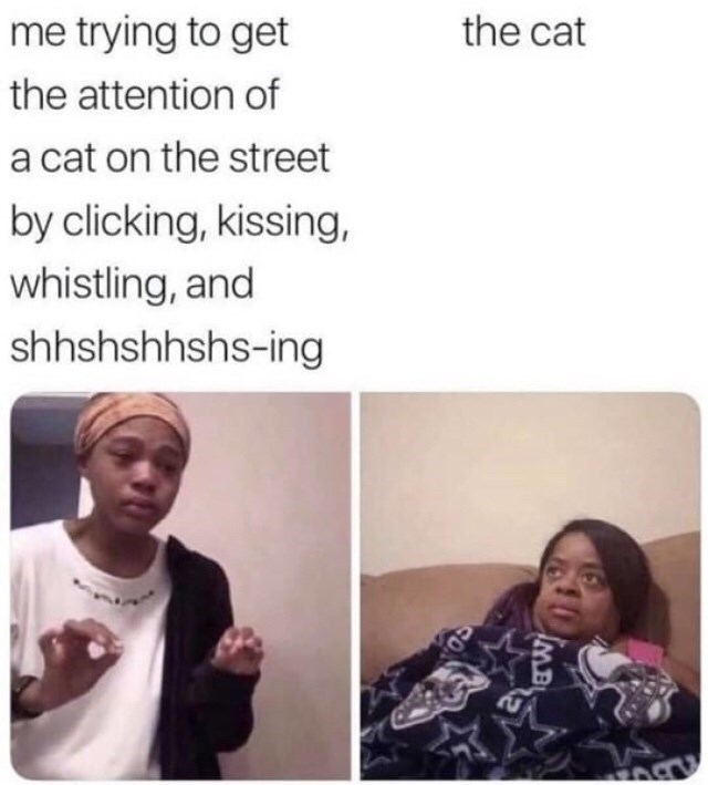 Face - me trying to get the cat the attention of a cat on the street by clicking, kissing, whistling, and shhshshhshs-ing 10 MB