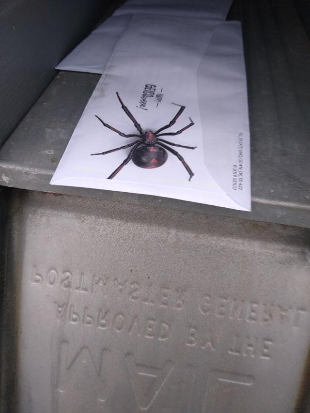 Spider - 502NSSCENES RROCTUNQ GOWN OE TE 422 e2019GEICO GEOWer!