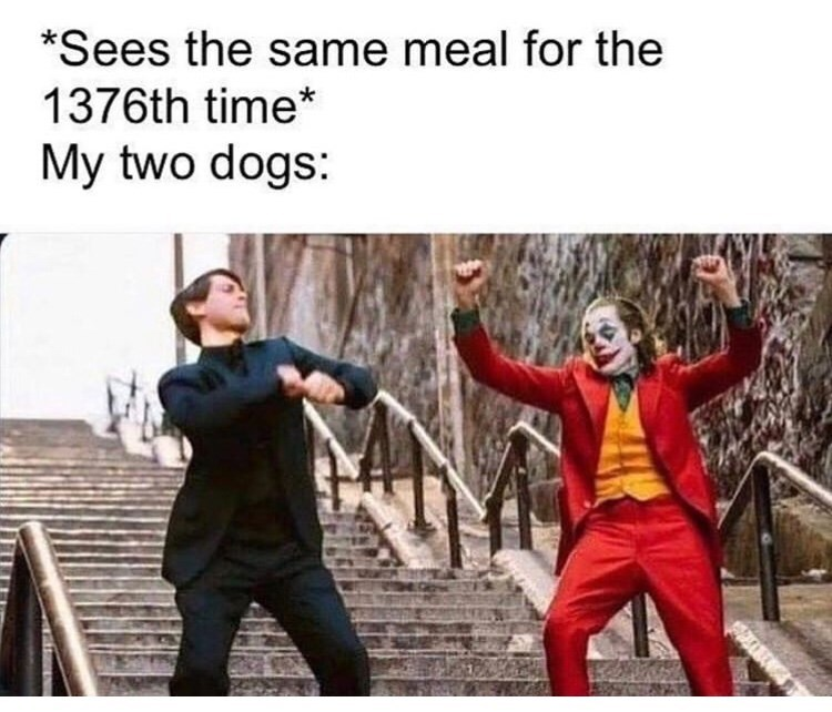 Fictional character - *Sees the same meal for the 1376th time* My two dogs: