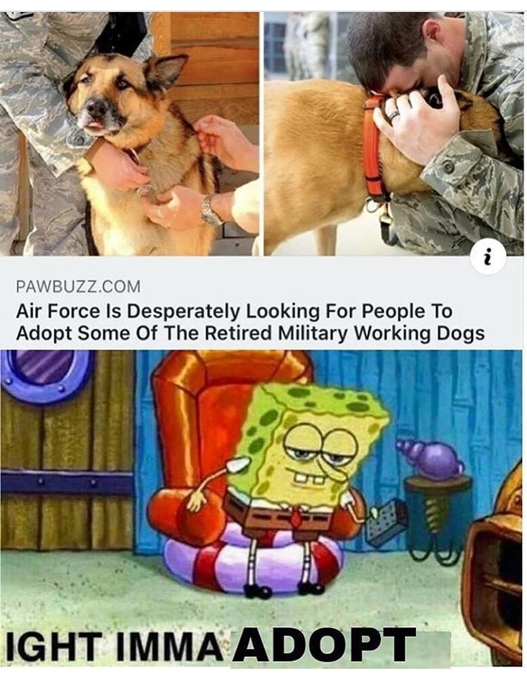 Cartoon - PAWBUZZ.COM Air Force Is Desperately Looking For People To Adopt Some Of The Retired Military Working Dogs IGHT IMMA ADOPT