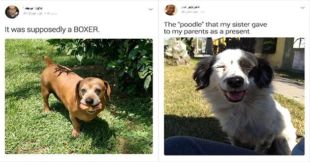 tweets animals dogs breeds
