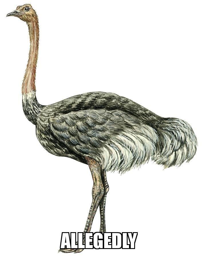 Bird - ALLEGEDLY