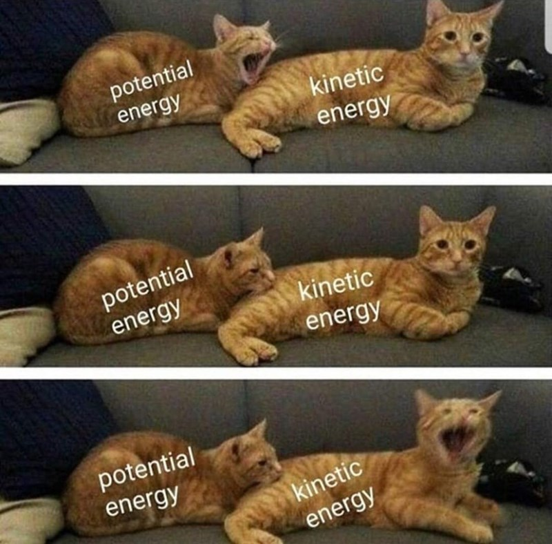 Cat - potential energy kinetic energy potential energy kinetic energy potential energy kinetic energy
