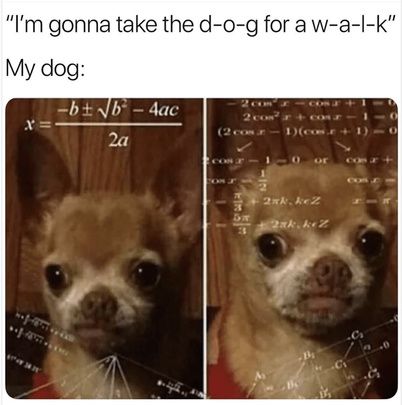 "Canidae - ""I'm gonna take the d-o-g for a w-a-l-k"" My dog: -bt Nb-4ac 2c0s 2 cos (2 cos-1)(cos. =x 2a 10 or CON COS 2. keZ 2Nk. keZ 3 -C"