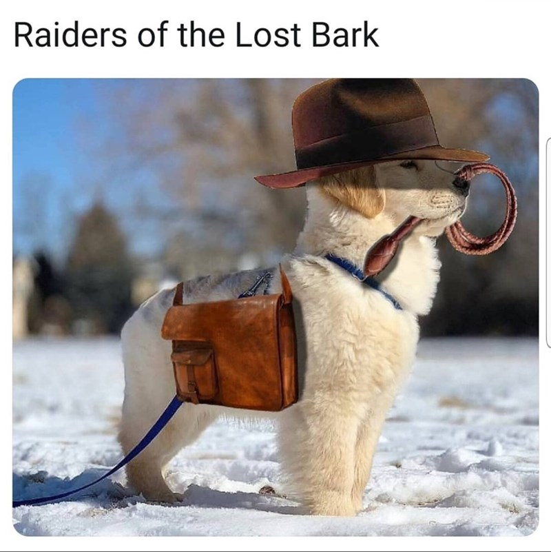 Dog - Raiders of the Lost Bark