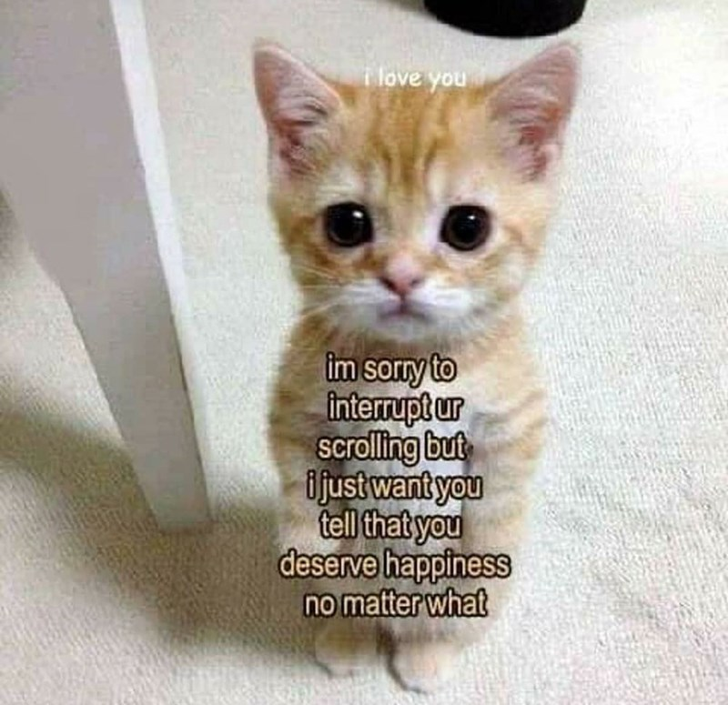 Cat - love you im sorry to Interupt ur scrolling but ijust want you tell that you deserve happiness no matter what