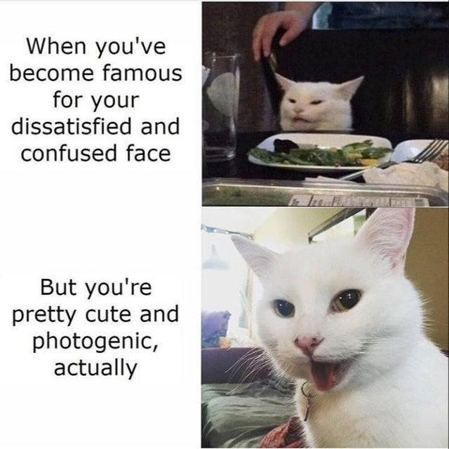 Cat - When you've become famous for your dissatisfied and confused face But you're pretty cute and photogenic, actually