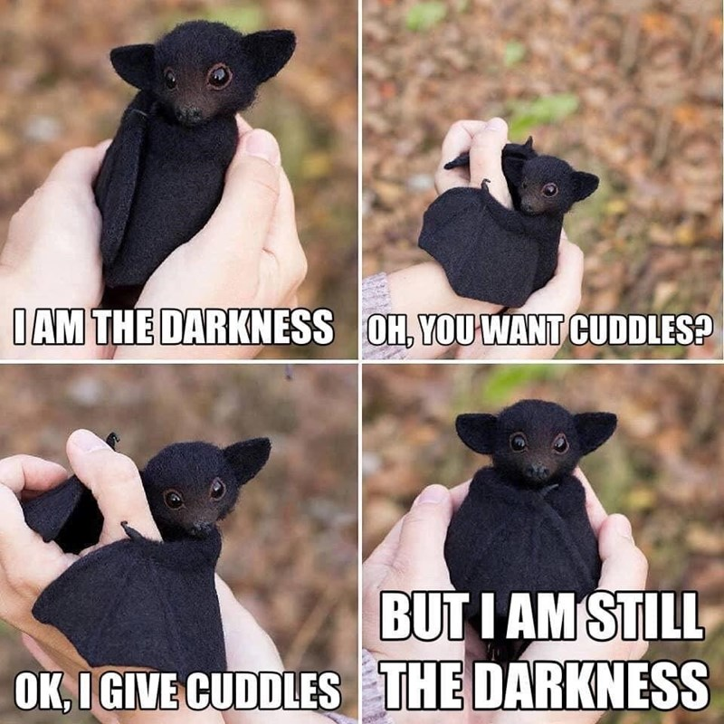 Dog breed - IAM THE DARKNESS OH, YOUWANT CUDDLES? BUTI AM STILL OK,IGIVE CUDDLES THE DARKNESS