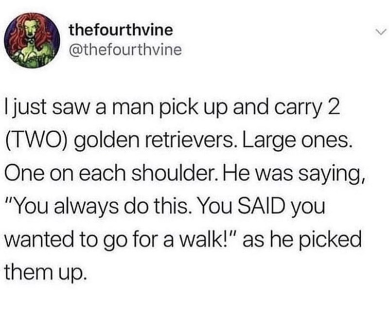 """Text - thefourthvine @thefourthvine I just saw a man pick up and carry 2 (TWO) golden retrievers. Large ones. One on each shoulder. He was saying, """"You always do this. You SAID you wanted to go for a walk!"""" as he picked them up."""