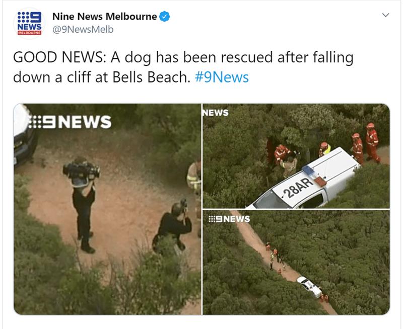 Tree - 9 Nine News Melbourne NEWS MELBOURNE @9NewsMelb GOOD NEWS: A dog has been rescued after falling down a cliff at Bells Beach. #9News 9NEWS NEWS 28AR ENEWS