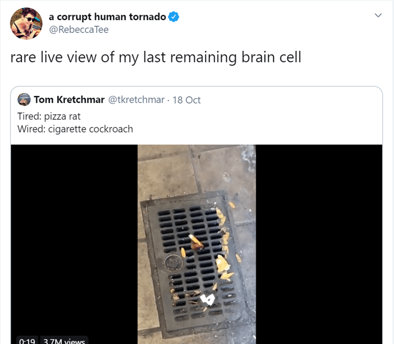 Text - a corrupt human tornado @RebeccaTee live view of my last remaining brain cell Tom Kretchmar @tkretchmar 18 Oct Tired: pizza rat Wired: cigarette cockroach 0:19 37M views