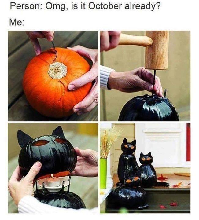 cat memes - 9377817856