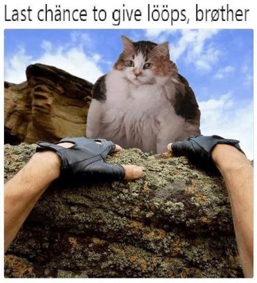 Cat - Last chänce to give lööps, brøther
