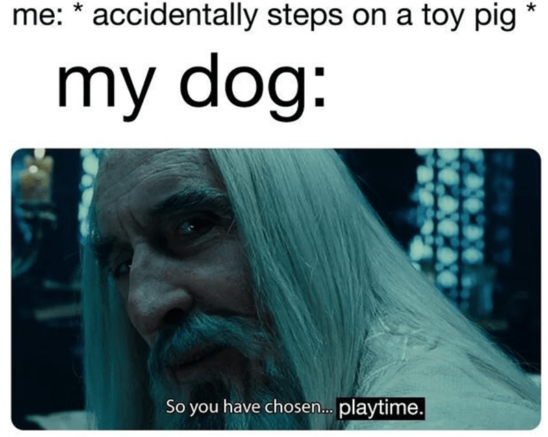 Text - me: accidentally steps on a toy pig my dog: So you have chosen... playtime.