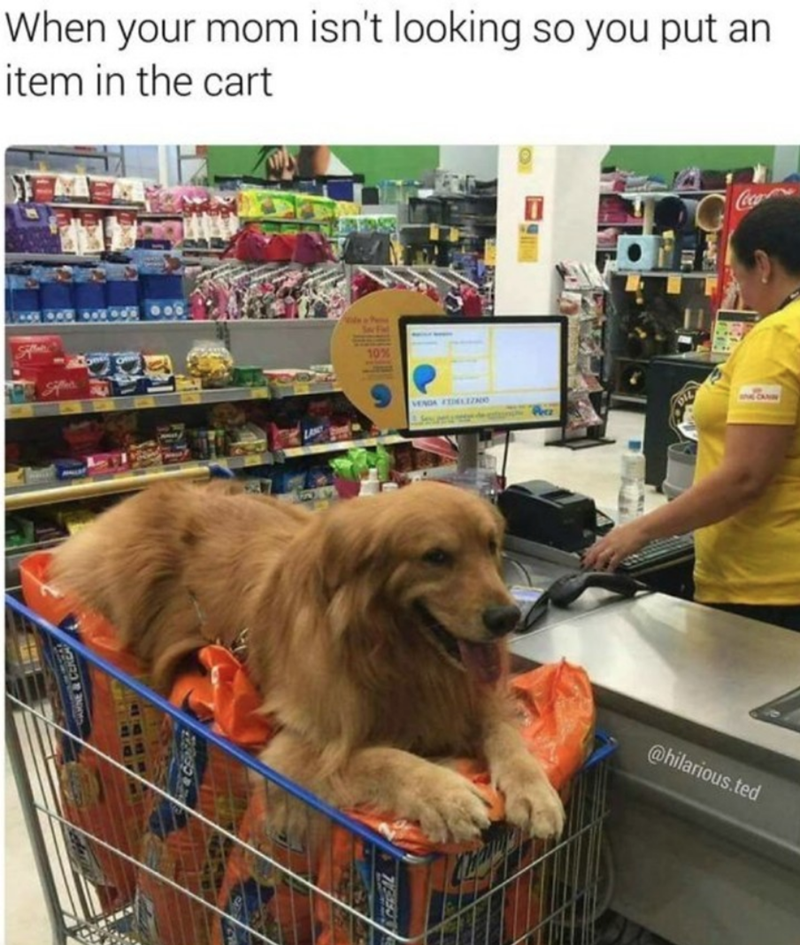 Dog - looking so you put an When your mom isn't item in the cart wwCA VENDA TELZ @hilarious.ted C&CENEA