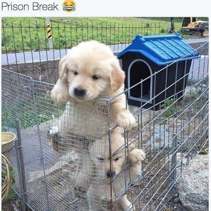 Dog - Prison Break