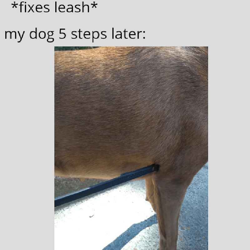 Skin - *fixes leash* my dog 5 steps later: