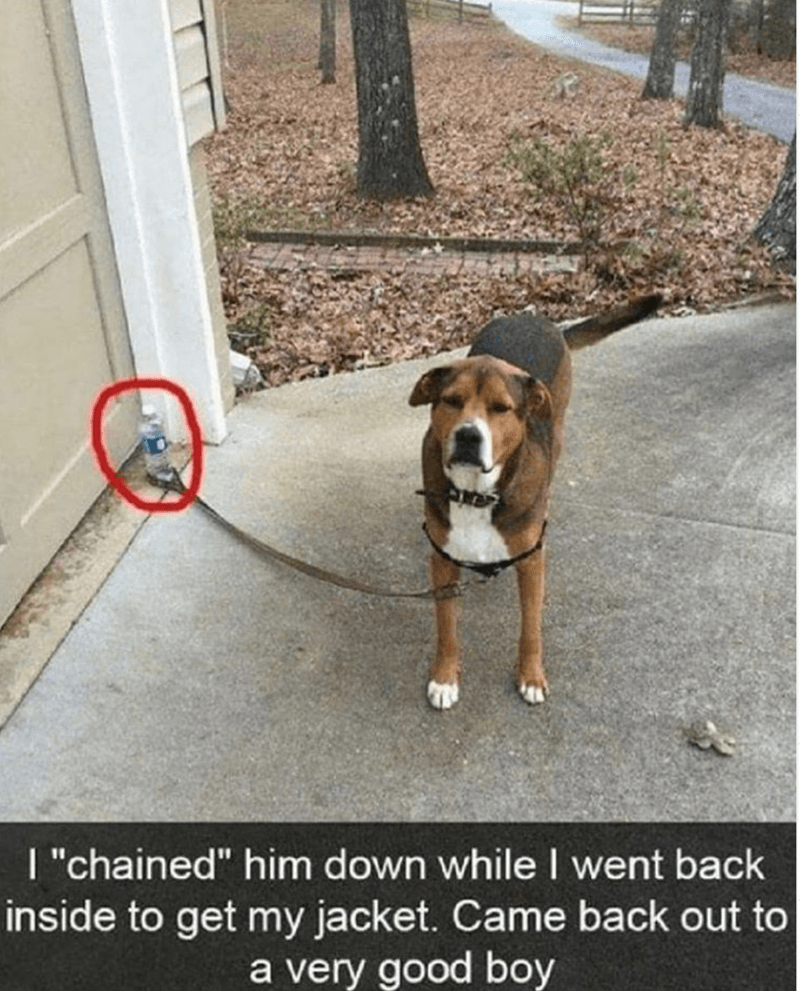 "Dog - I ""chained"" him down while I went back inside to get my jacket. Came back out to a very good boy"