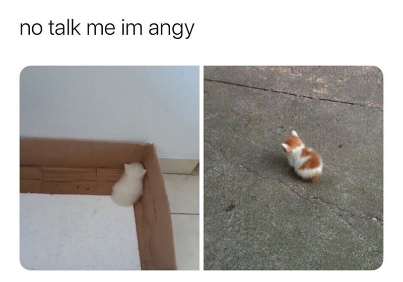 Cat - no talk me im angy 20