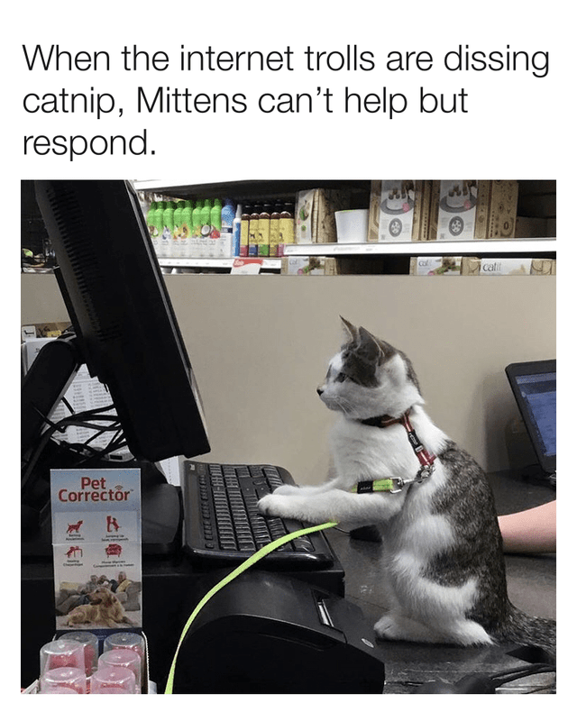 Cat - When the internet trolls are dissing catnip, Mittens can't help but respond. cati Pet Corrector